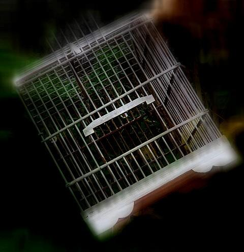 Cage-rt1.jpg