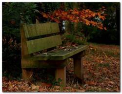 Couleur-dautomne-nov-2010-01.jpg