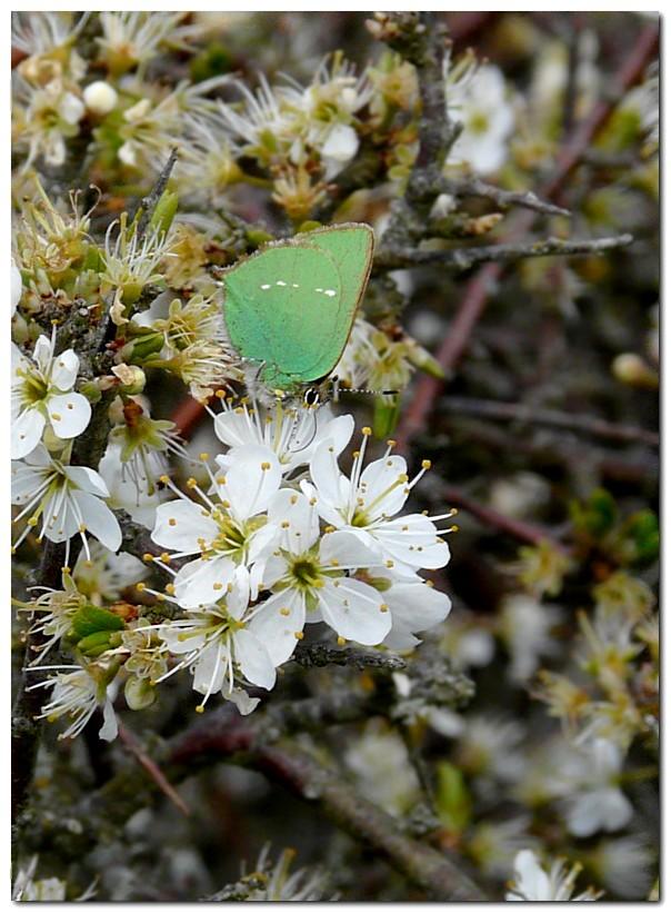 argus-vert-vv3.jpg
