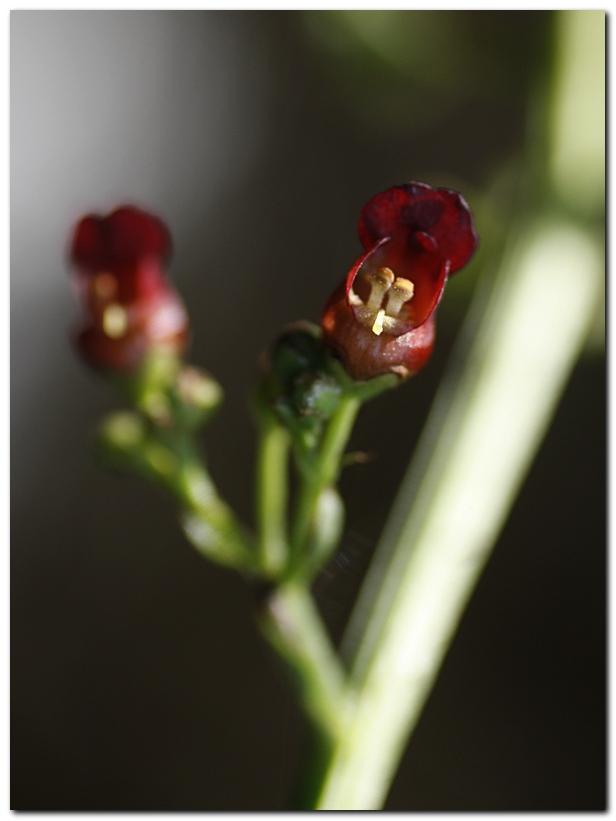 fleurs-rouge-ry1-1.jpg