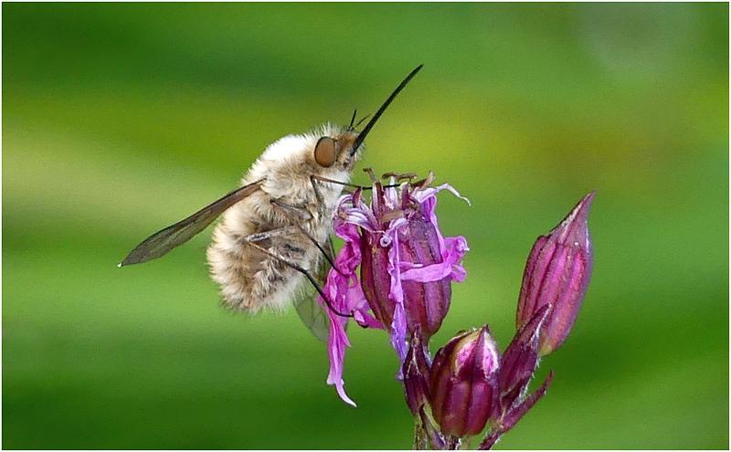 Insecte f1