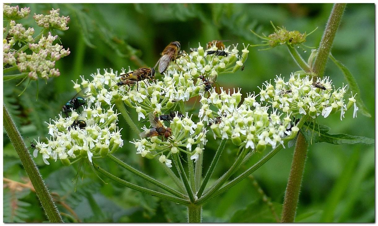 insecte-o1.jpg