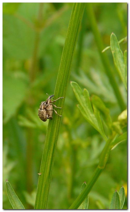 insecte-ot1.jpg