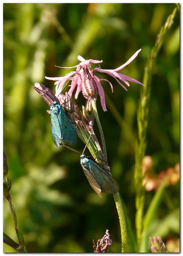 la-turquoise-2.jpg
