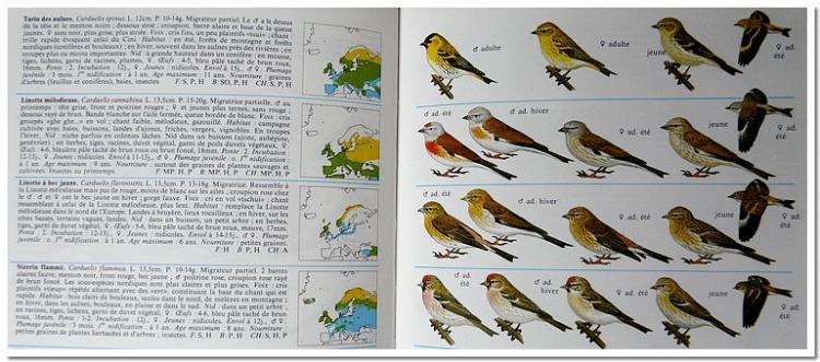 oiseaux-d-europe-1.jpg