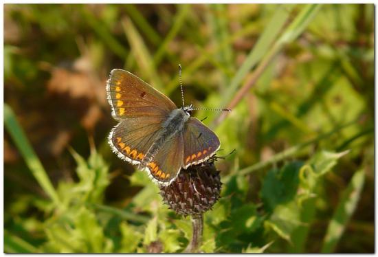 papillon-xe1.jpg