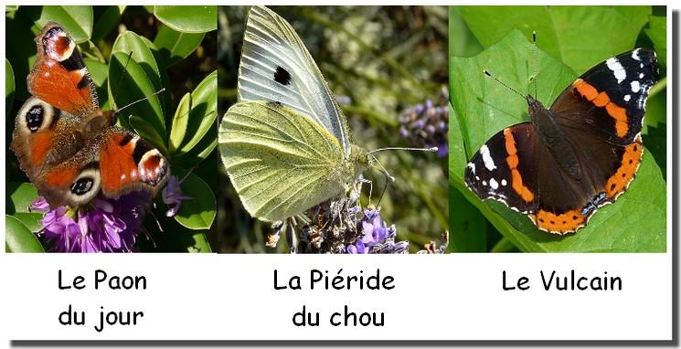papillons-fev-2012.jpg