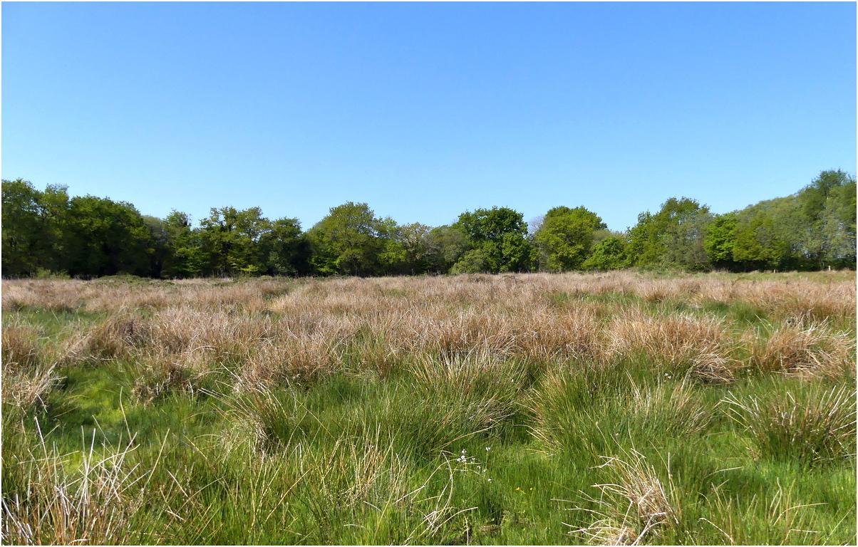 Prairie humide riec v1