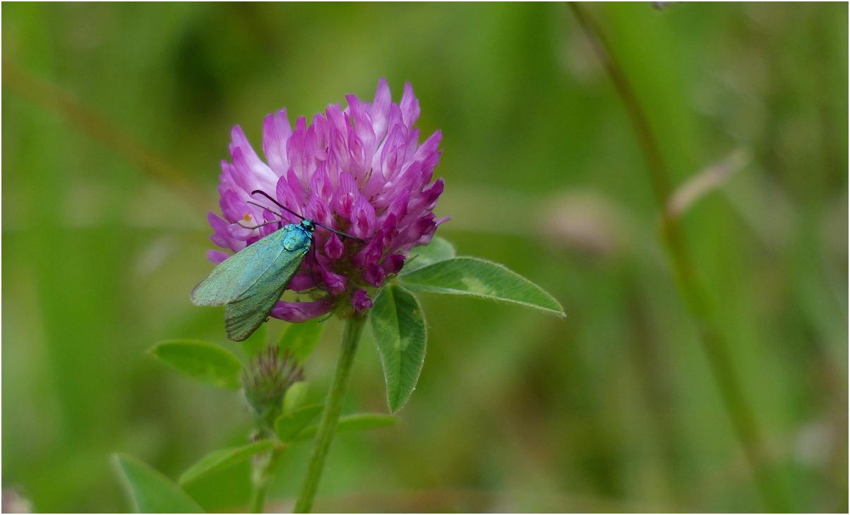 Turquoise rf1